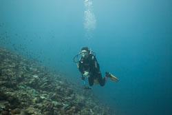 BD-150424-Maldives-7998-Homo-sapiens.-Linnaeus.-1758-[Diver].jpg